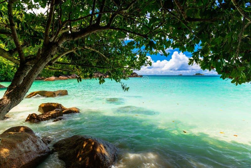 Tropisch strand De Seychellen stock foto's
