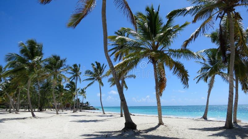 Tropisch Strand met een mening met palmen royalty-vrije stock fotografie