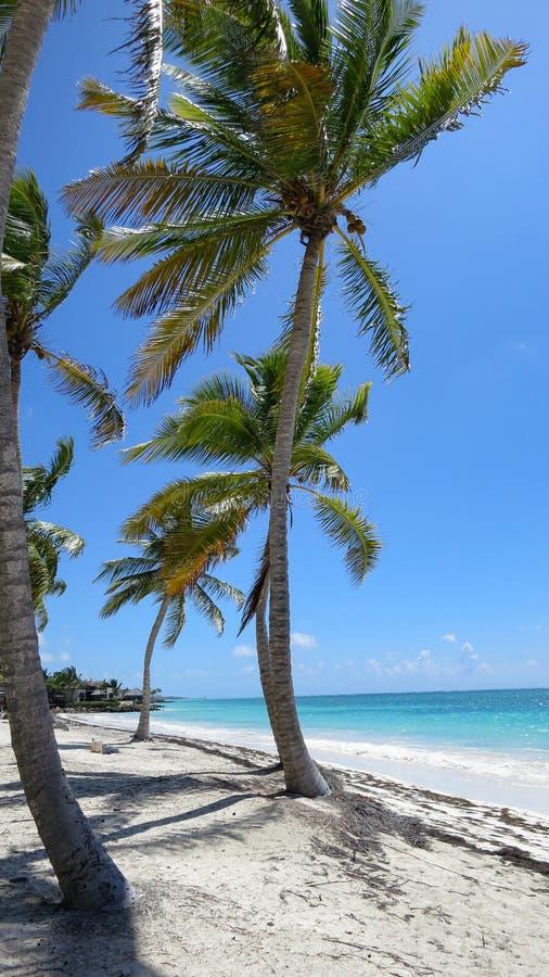 Tropisch Strand met een mening met palmen stock foto
