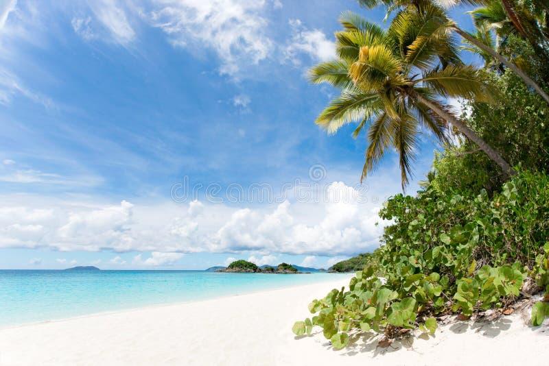 Tropisch strand met kokosnotenpalmen stock afbeeldingen