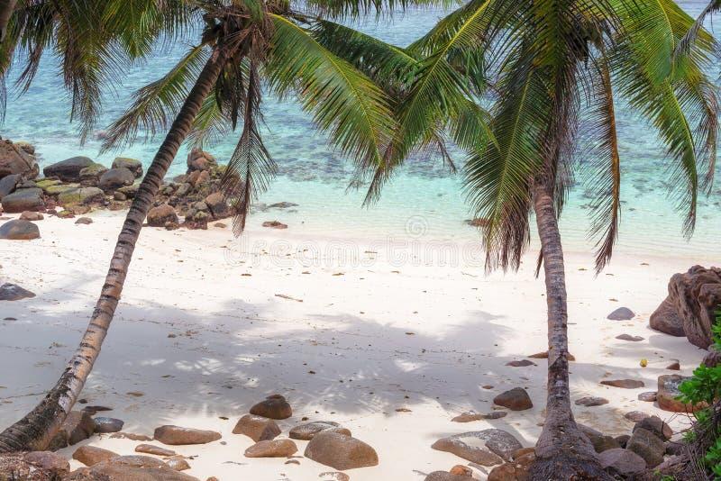 Tropisch strand met kokospalm stock afbeeldingen
