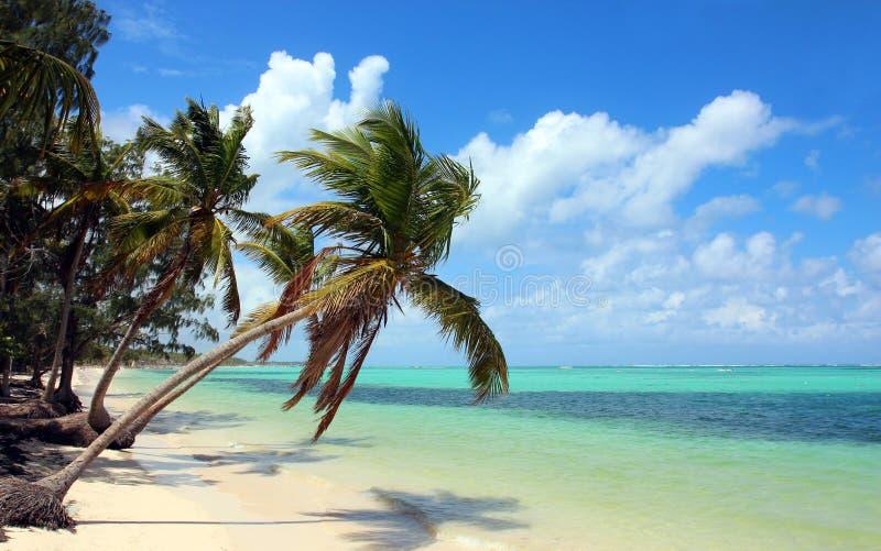 Tropisch strand met kokospalmen stock fotografie