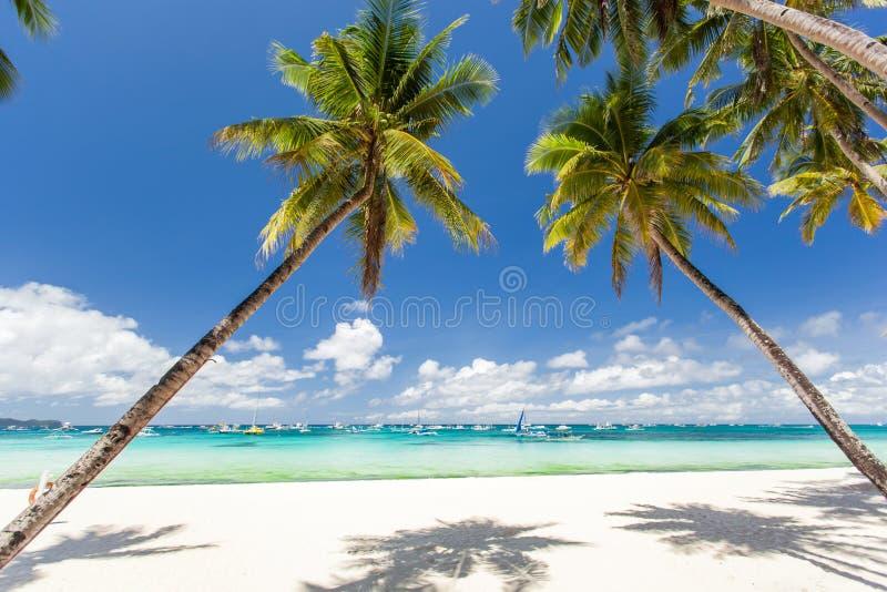 Tropisch strand met mooie palmen en wit zand royalty-vrije stock afbeelding