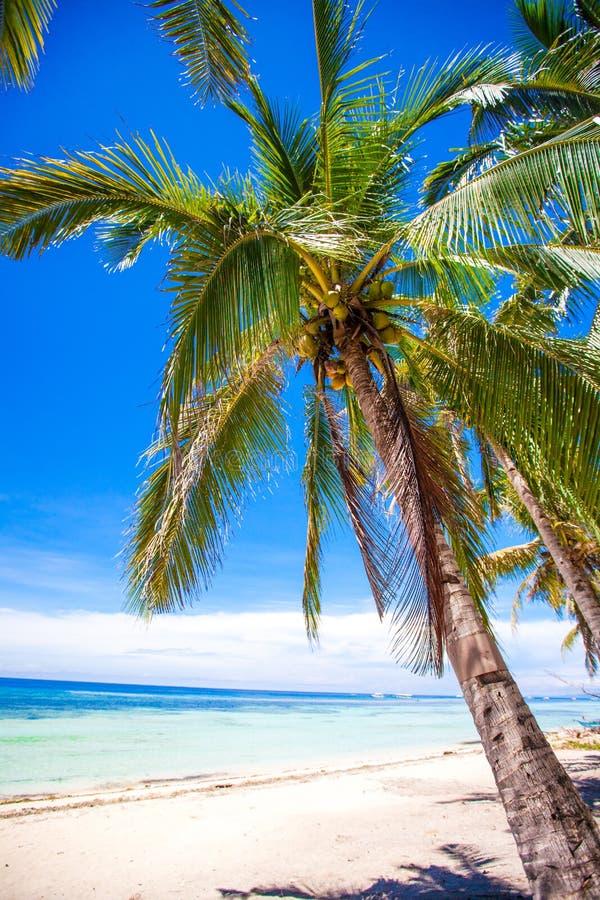 Tropisch strand met mooie palmen en wit zand stock afbeelding