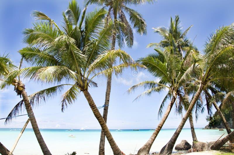 Tropisch strand met palm stock fotografie