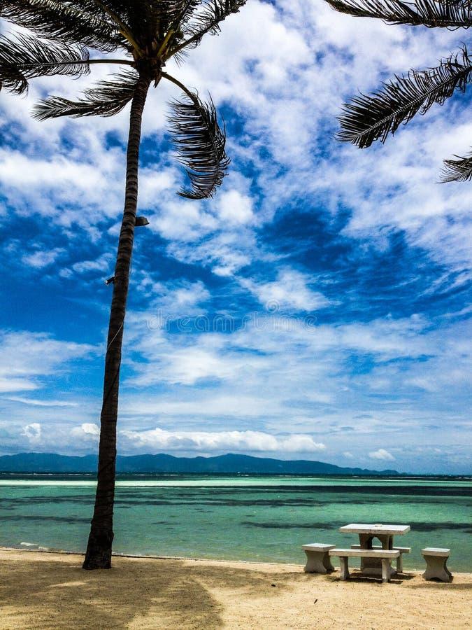 Tropisch strand met palmen stock foto's