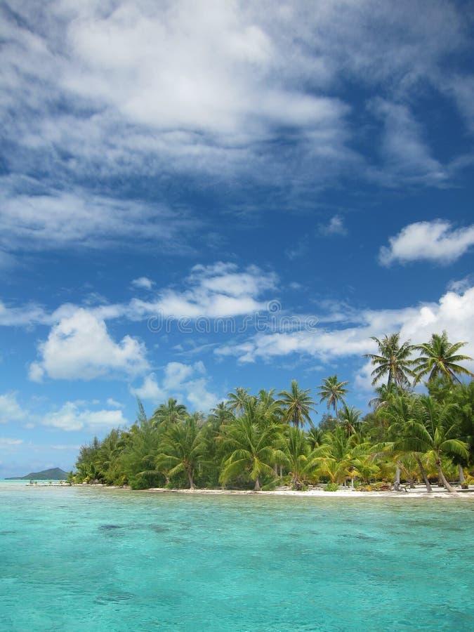 Tropisch strand met palmen royalty-vrije stock foto