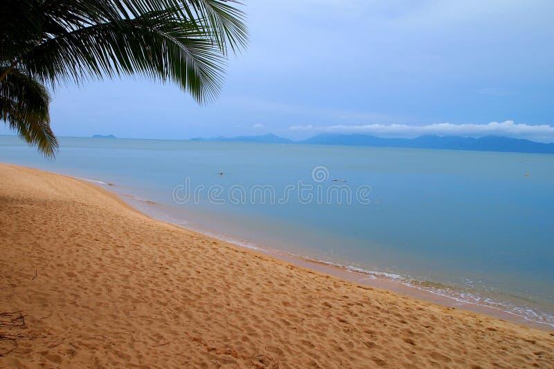 Tropisch strand met palmen stock afbeelding