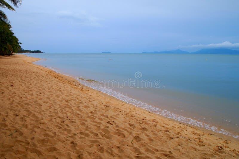 Tropisch strand met palmen en vage wolken stock foto's