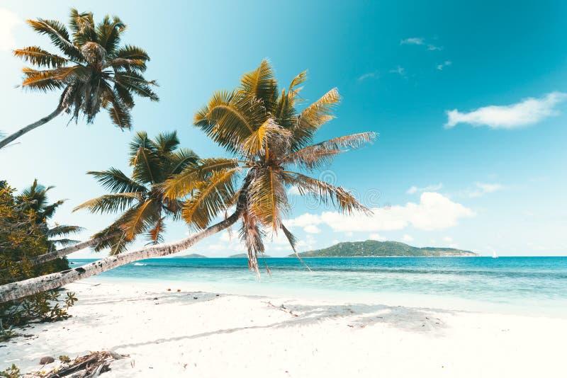 Tropisch Strand in Seychellen stock afbeelding