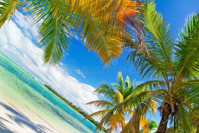 Tropisch strand van Caraïbische overzees royalty-vrije stock afbeelding