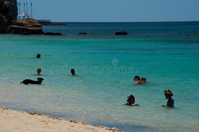 Tropisch strand, zwemmers plus zwemmende hond stock afbeelding