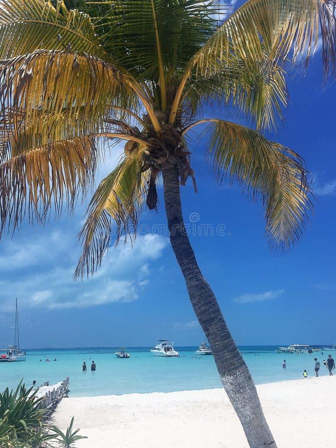 Tropisch Strandparadijs, Isla Mujeres, Mexico stock foto's