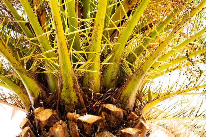 Tropisch Sunny Day, Groen en Winderig hout, Kokosnoot voor vakanties, Mooie Palm bij het strand, Glanzende Hemel over het Zand, C royalty-vrije stock foto's