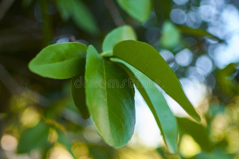 Tropisch Verlofdetail royalty-vrije stock afbeeldingen