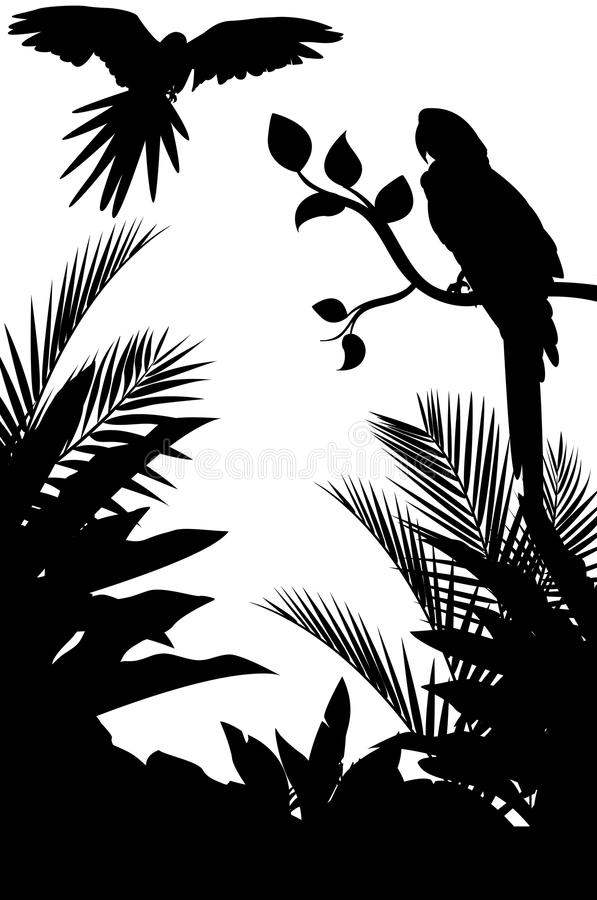 Tropisch vogelsilhouet met bosachtergrond stock illustratie