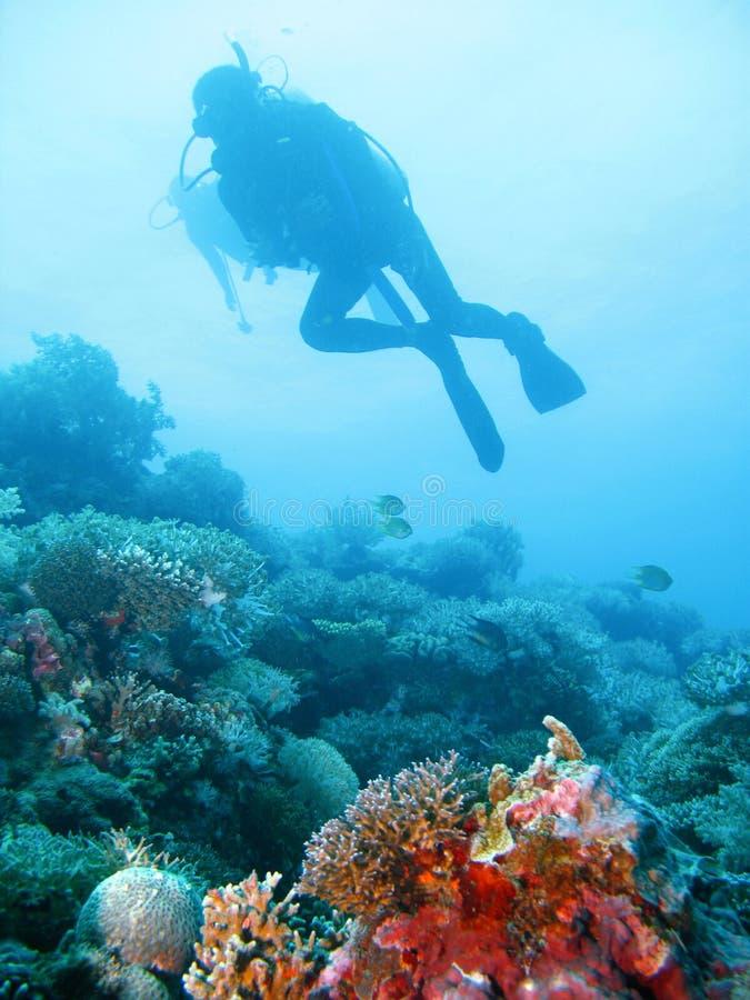 Tropisch vrij duikenavontuur stock afbeelding