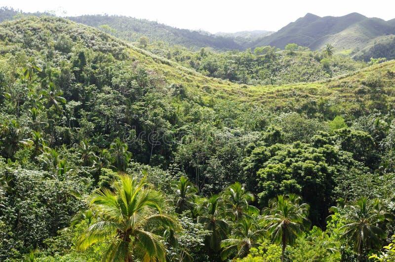 Tropisch wildernisbos in Dominicaanse Republiek royalty-vrije stock foto