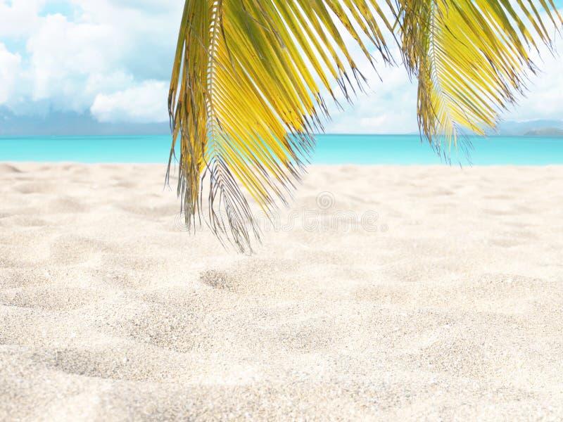 Tropisch wit zandig strand, turkooise overzees en kokosnotenpalmbladen vage achtergrond stock afbeeldingen