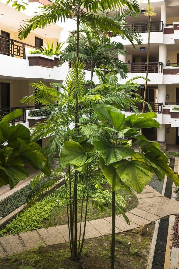 Tropische Aanpassing stock fotografie