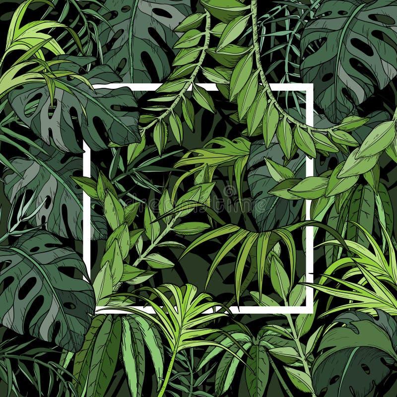 Tropische achtergrond met palmbladen, wildernisinstallaties en wit kader royalty-vrije illustratie