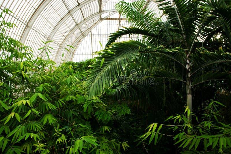 Tropische Anlagen in den königlichen botanischen Gärten, Kew stockbild