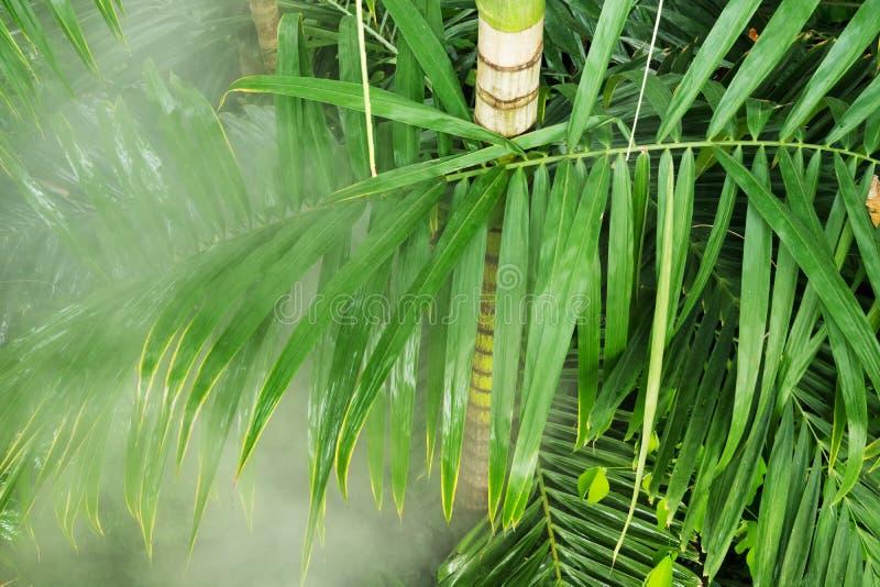 Tropische Anlagen in den königlichen botanischen Gärten, Kew lizenzfreies stockbild