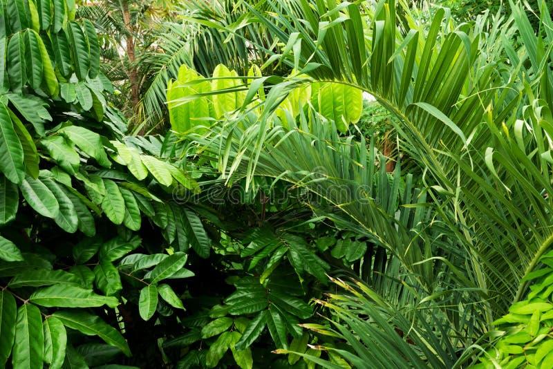 Tropische Anlagen in den königlichen botanischen Gärten, Kew stockfotos