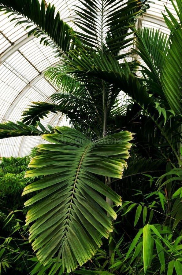 Tropische Anlagen in den königlichen botanischen Gärten, Kew stockbilder