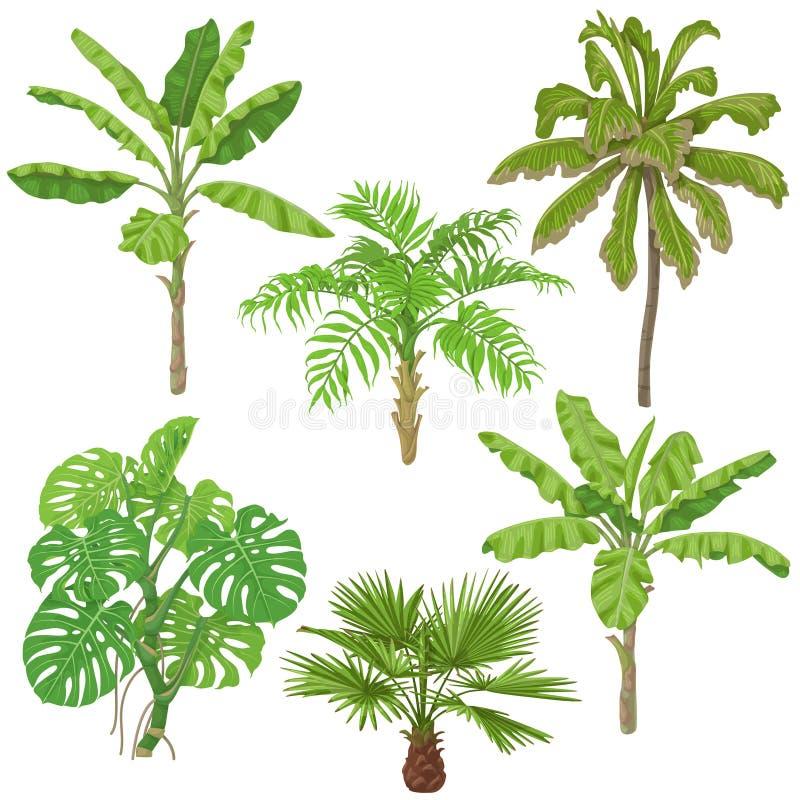 Tropische Anlagen eingestellt stock abbildung