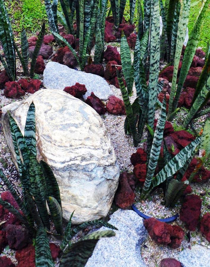 Tropische Art trockene Rockerylandschaftsgestaltung lizenzfreie stockfotos