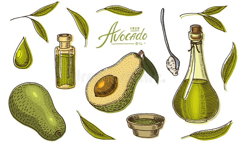 Tropische avocado Reeks van altijdgroene fruitinstallatie Organische olie in de fles bladeren en takken, blad en halve zaden stock illustratie