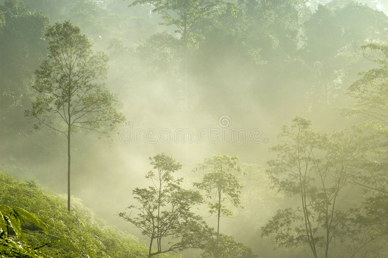 Tropische Bäume des nebelhaften Morgens lizenzfreie stockfotos