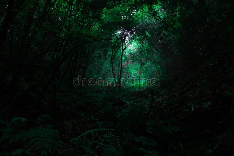 Tropische Bäume des Waldes in Regenzeiten stockbilder