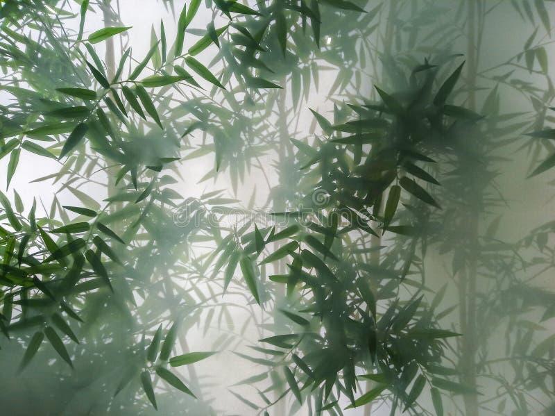 Tropische bamboebomen achter het kikkerglas in de mist met achtergrondverlichting versiering van het terrein van de groene plante royalty-vrije stock foto