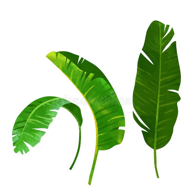 Tropische banaan groene die bladeren op witte achtergrond worden geïsoleerd stock afbeeldingen