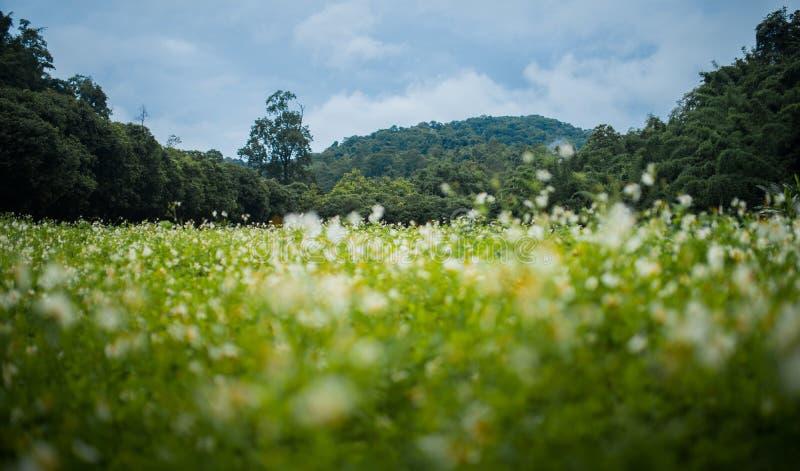 Tropische bergen met het gebiedsvoorgrond van de onduidelijk beeld witte bloem royalty-vrije stock fotografie