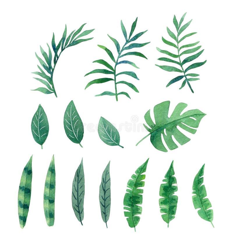 Tropische Blätter des Aquarells für Entwurf stockbilder
