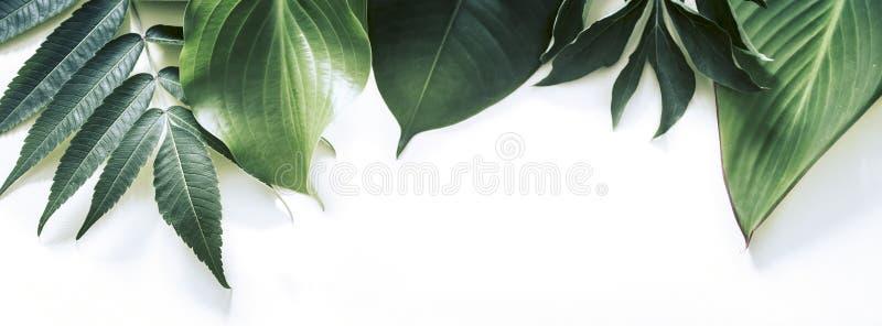 Tropische Blätter auf einem weißen Hintergrund lizenzfreie stockfotos