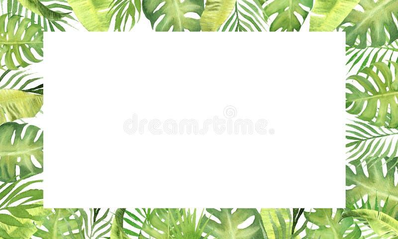 Tropische Blätter des Aquarellgrenzrahmen-Grüns monstera, Palmeblätter, Unterwasserbananeblätter stock abbildung