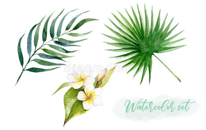 Tropische Blätter des Aquarells stellten mit Blumen Plumeria auf einem weißen Hintergrund ein lizenzfreie abbildung