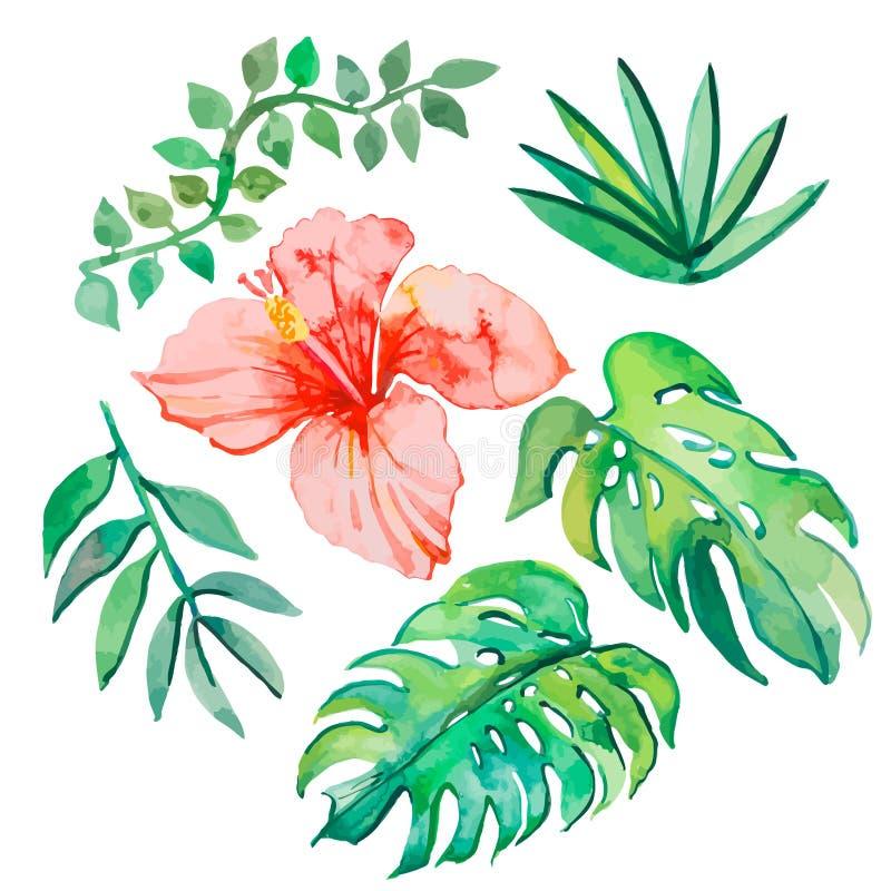 Tropische Blätter lokalisiert auf weißem Hintergrund lizenzfreie abbildung