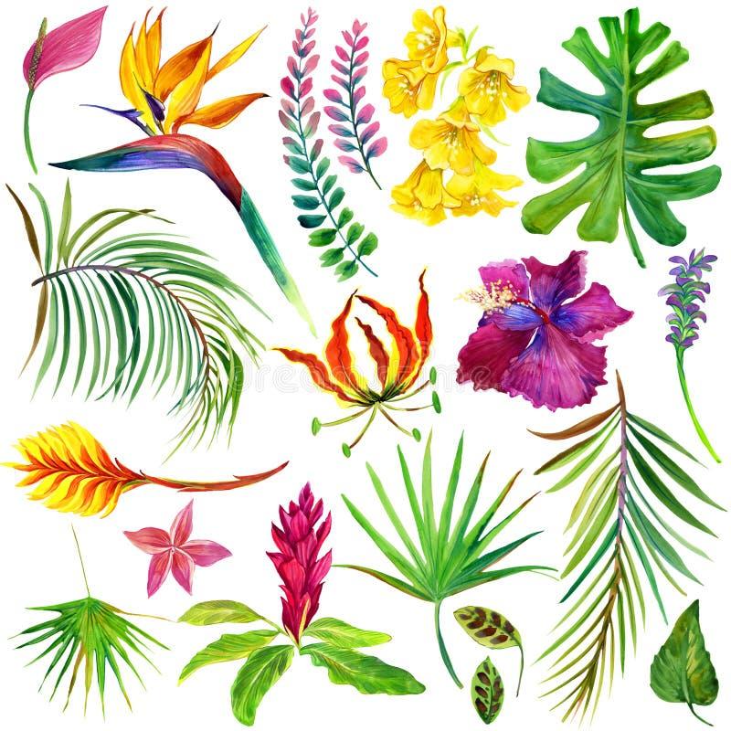 Tropische Blätter und Blumen stock abbildung