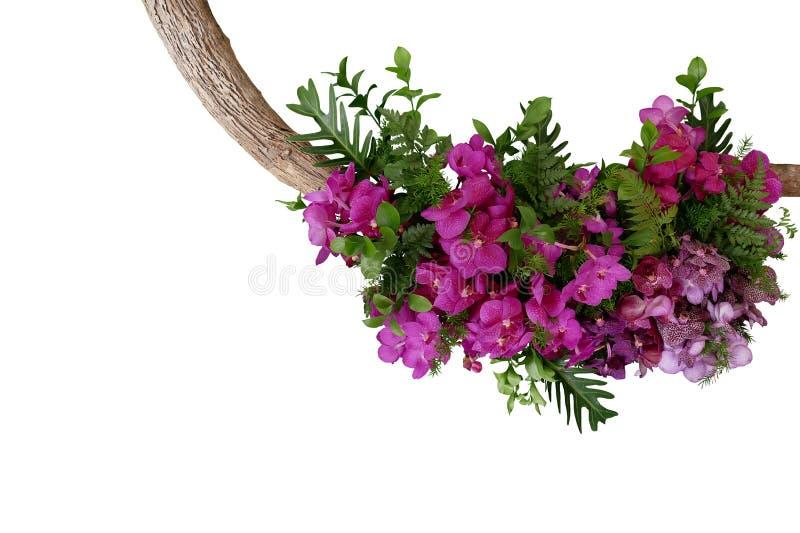 Tropische Blätter und purpurrote Vanda-Orchidee blüht, Blumen-arrangem lizenzfreies stockfoto