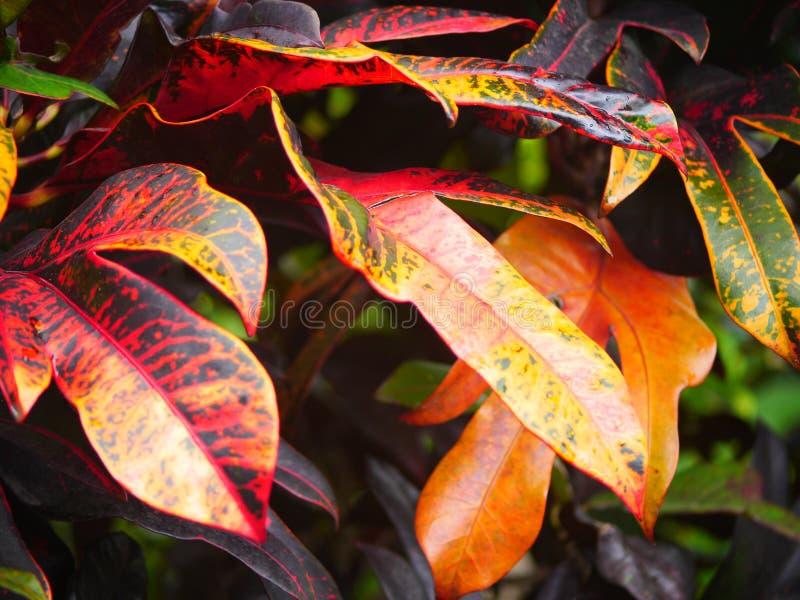 Tropische Bladeren royalty-vrije stock foto's