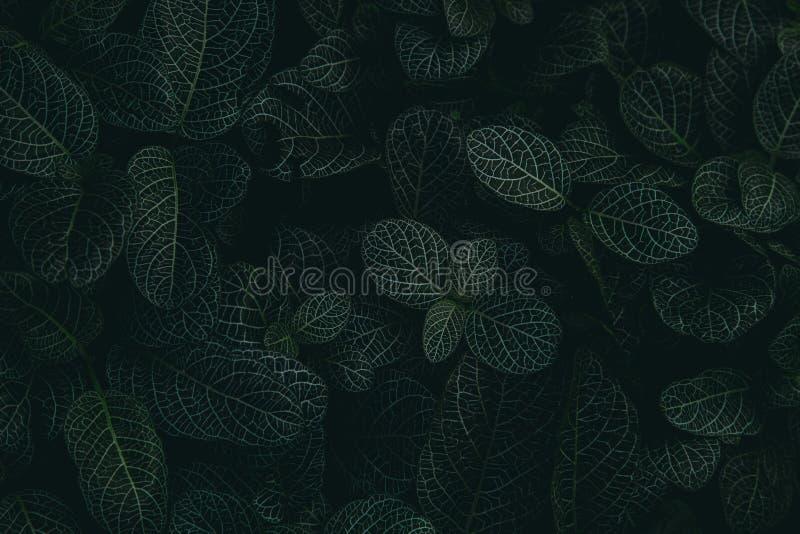 Tropische bladeren in een wildernis, donker en humeurig schot stock afbeeldingen