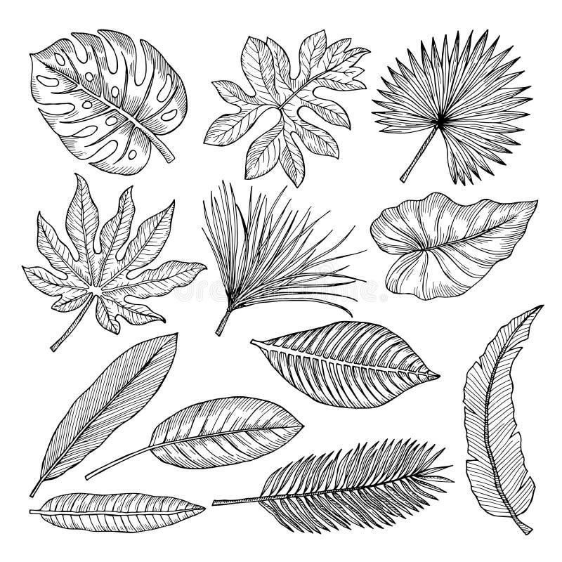 Tropische bladeren en installaties De vectorbeelden van de handtekening isoleren stock illustratie