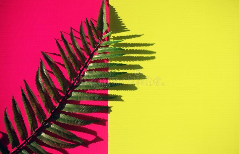 Tropische bladeren, exotisch gebladerte met exemplaar ruimte veelkleurige achtergrond stock afbeelding