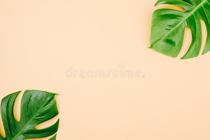 Tropische bladeren Monstera op gele achtergrond met ruimte voor een tekst Vlak leg, hoogste mening, pastelkleuren, de zomer minim stock afbeelding