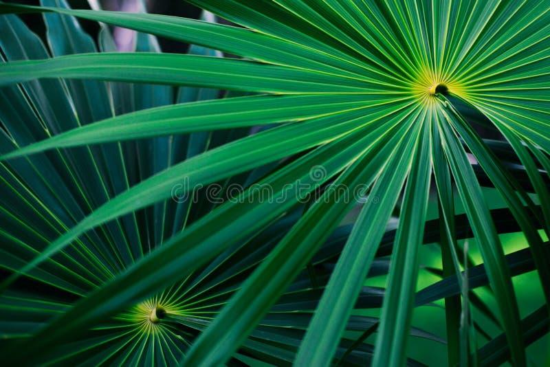 Tropische bladeren van Mexico stock afbeelding